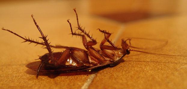 WD-40 mata barata e outros insetos