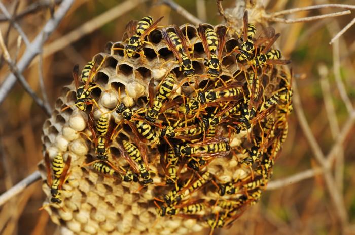 WD-40 previne crescimento de ninhos de vespa
